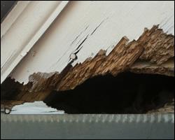 Squirrel damage in Alexandria VA