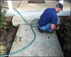 Dead animal removal Alexandria VA