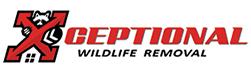 Alexandria Wildlife Removal